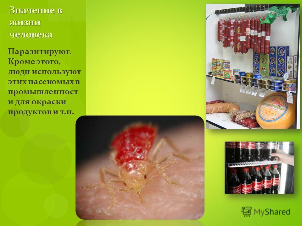 Паразитируют. Кроме этого, люди используют этих насекомых в промышленност и для окраски продуктов и т.п. Значение в жизни человека