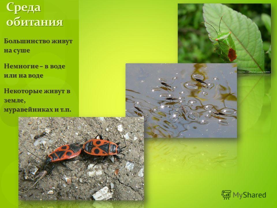 Большинство живут на суше Немногие – в воде или на воде Некоторые живут в земле, муравейниках и т.п. Среда обитания
