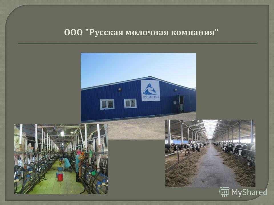 ООО  Русская молочная компания