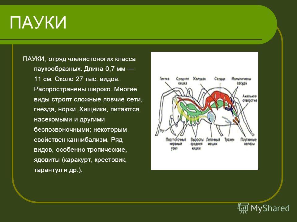 Гдз по русскому 20007год