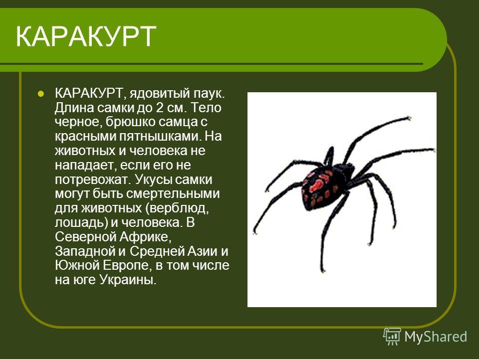 КАРАКУРТ КАРАКУРТ, ядовитый паук. Длина самки до 2 см. Тело черное, брюшко самца с красными пятнышками. На животных и человека не нападает, если его не потревожат. Укусы самки могут быть смертельными для животных (верблюд, лошадь) и человека. В Север