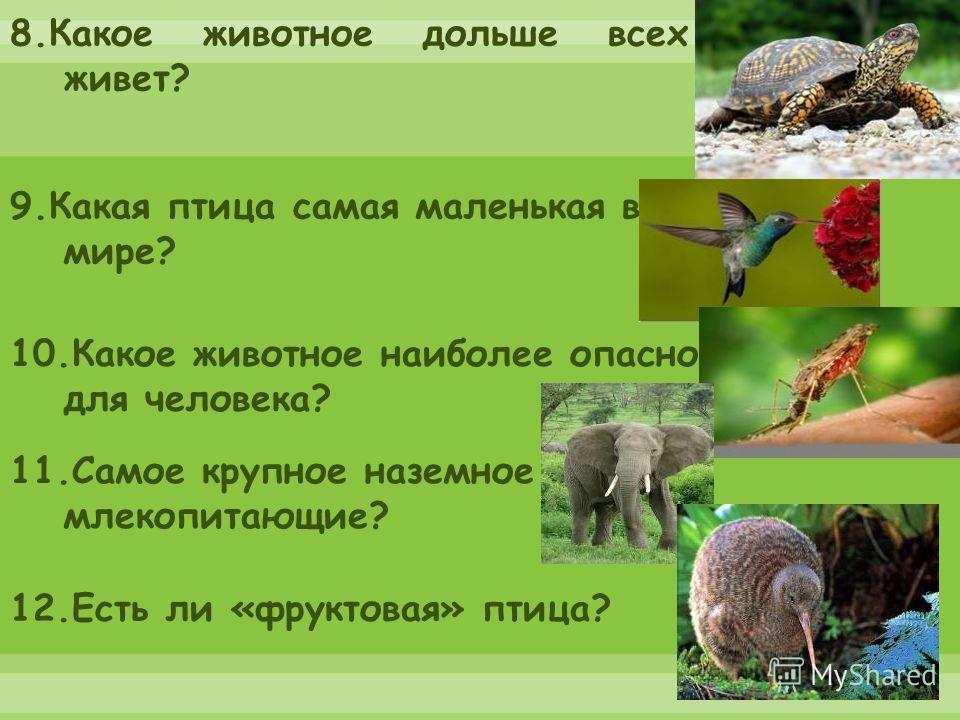 8.Какое животное дольше всех живет? 9.Какая птица самая маленькая в мире? 10.Какое животное наиболее опасно для человека? 11.Самое крупное наземное млекопитающие? 12.Есть ли «фруктовая» птица?