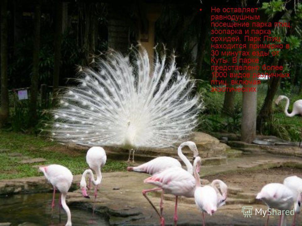 Не оставляет равнодушным посещение парка птиц, зоопарка и парка орхидей. Парк Птиц находится примерно в 30 минутах езды от Куты. В парке представлено более 1000 видов различных птиц, включая экзотических.