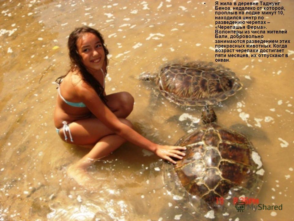 Я жила в деревне Таджунг Беноа, недалеко от которой, проплыв на лодке минут 10, находился центр по разведению черепах – «Черепашья Ферма». Волонтеры из числа жителей Бали, добровольно занимаются разведением этих прекрасных животных. Когда возраст чер