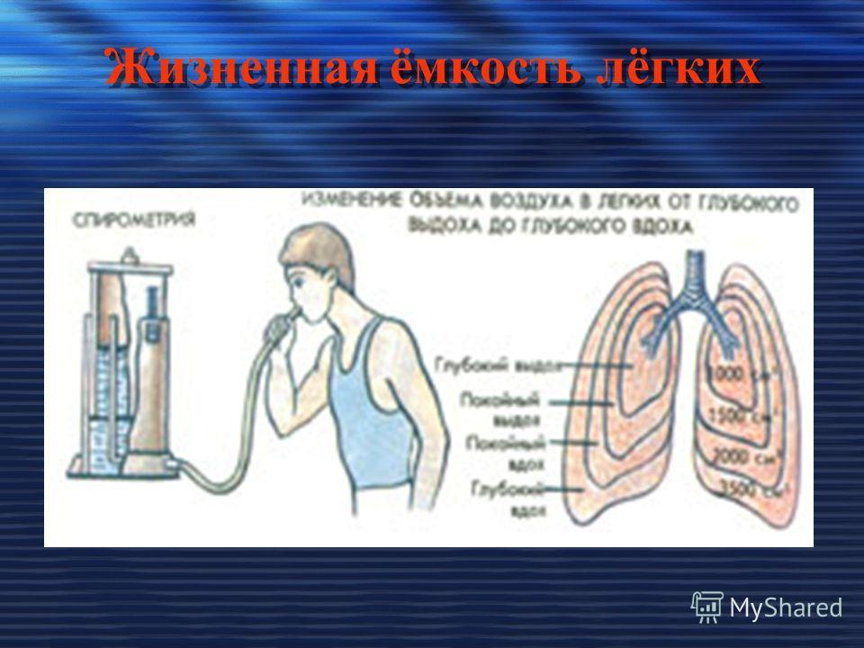 Жизненная ёмкость лёгких Жизненная ёмкость лёгких