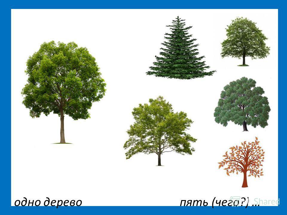 одно дерево пять (чего?) …