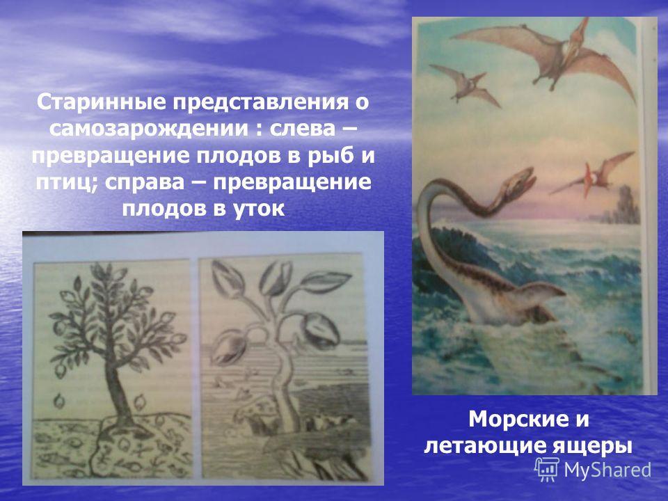 Морские и летающие ящеры Старинные представления о самозарождении : слева – превращение плодов в рыб и птиц; справа – превращение плодов в уток