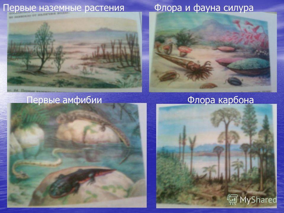 Флора карбона Первые наземные растенияФлора и фауна силура Первые амфибии