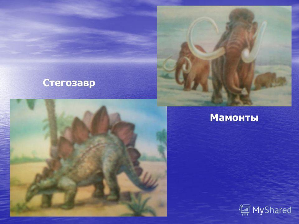 Стегозавр Мамонты