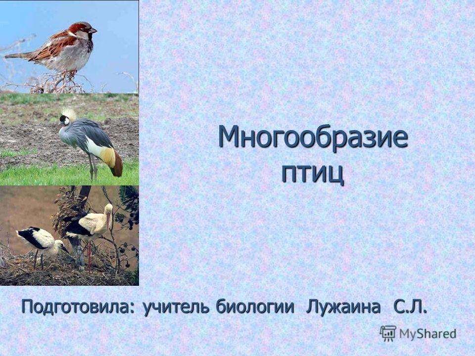 Многообразие птиц Подготовила: учитель биологии Лужаина С.Л.