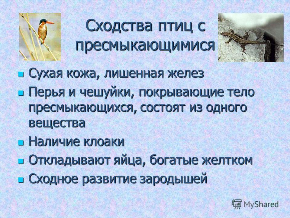 Сходства птиц с пресмыкающимися Сухая кожа, лишенная желез Сухая кожа, лишенная желез Перья и чешуйки, покрывающие тело пресмыкающихся, состоят из одного вещества Перья и чешуйки, покрывающие тело пресмыкающихся, состоят из одного вещества Наличие кл
