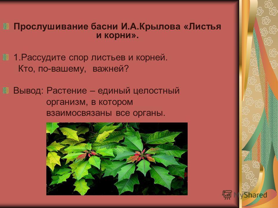 Прослушивание басни И.А.Крылова «Листья и корни». 1.Рассудите спор листьев и корней. Кто, по-вашему, важней? Вывод: Растение – единый целостный организм, в котором взаимосвязаны все органы.