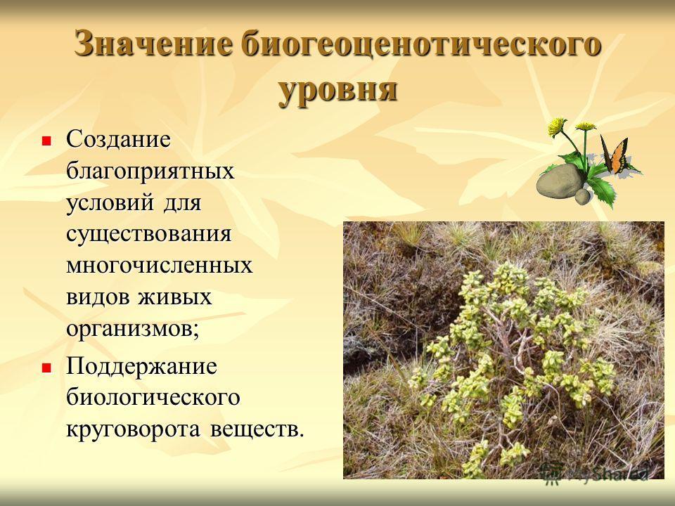 Значение биогеоценотического уровня Создание благоприятных условий для существования многочисленных видов живых организмов; Создание благоприятных условий для существования многочисленных видов живых организмов; Поддержание биологического круговорота