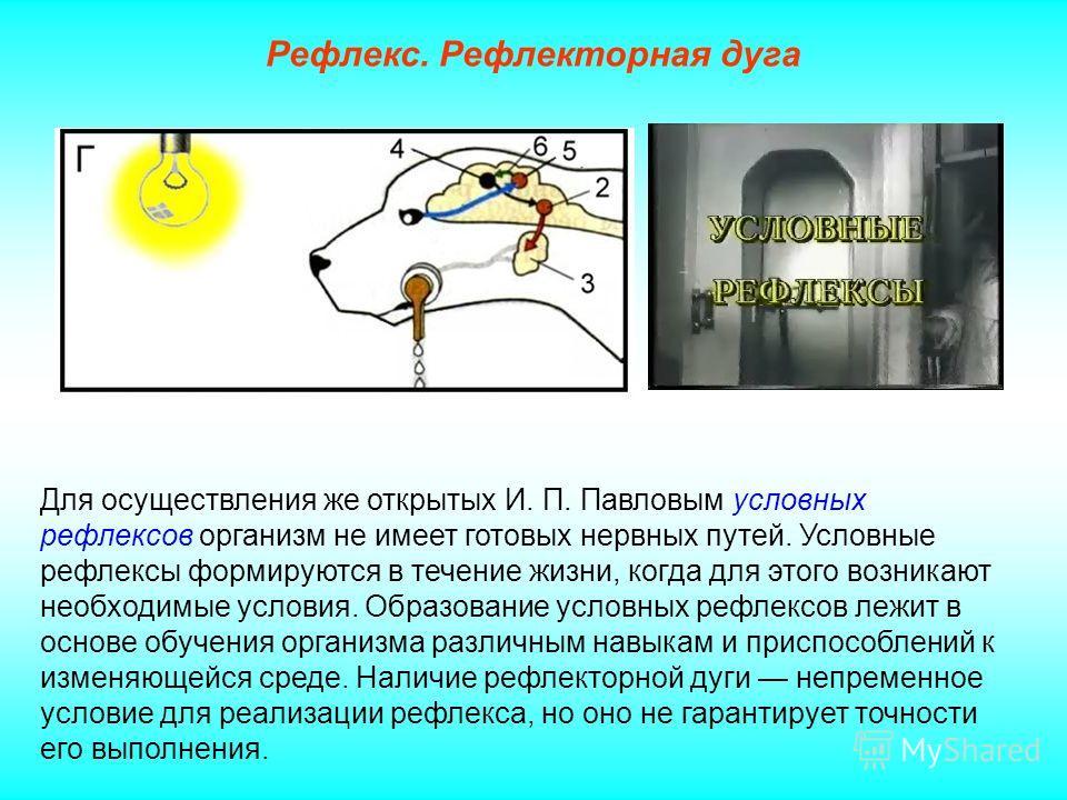 Для осуществления же открытых И. П. Павловым условных рефлексов организм не имеет готовых нервных путей. Условные рефлексы формируются в течение жизни, когда для этого возникают необходимые условия. Образование условных рефлексов лежит в основе обуче