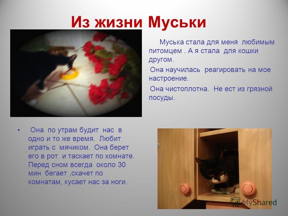 Из жизни Муськи Муська стала для меня любимым питомцем. А я стала для кошки другом. Она научилась реагировать на мое настроение. Она чистоплотна. Не ест из грязной посуды. Она по утрам будит нас в одно и то же время. Любит играть с мячиком. Она берет