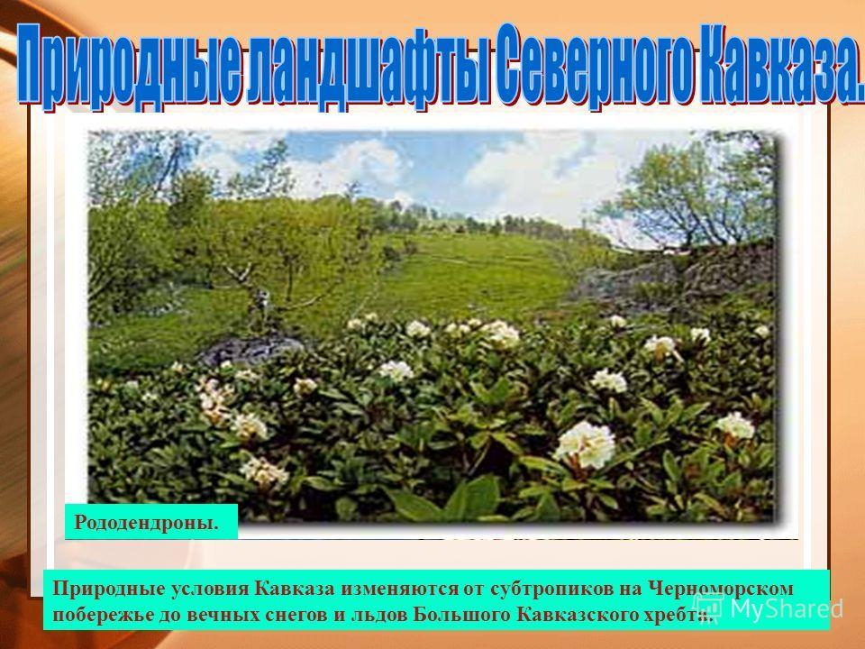 Вид на ЭльбрусПоляна перед перевалом Кват. Природные условия Кавказа изменяются от субтропиков на Черноморском побережье до вечных снегов и льдов Большого Кавказского хребта. Теберда. Черноморское побережье. Анапа.Сочи. Растения субтропиков.Рододендр