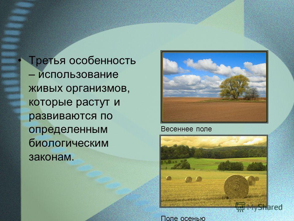 Третья особенность – использование живых организмов, которые растут и развиваются по определенным биологическим законам. Весеннее поле Поле осенью