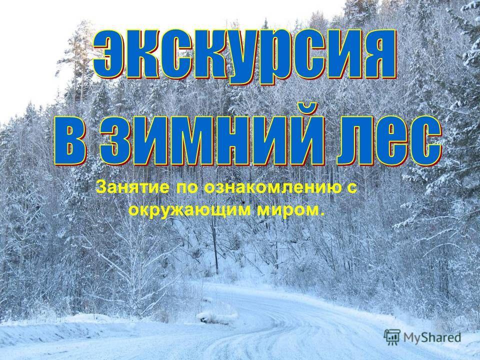 Лес 3 беседа о зимнем лесе 4