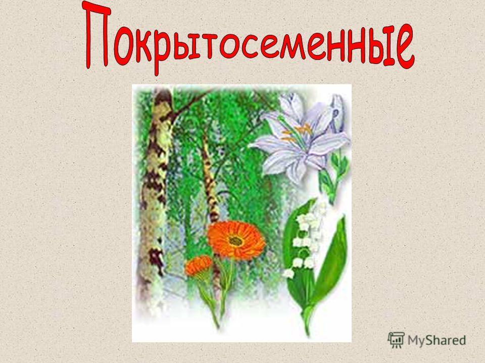 Растения культурные растения