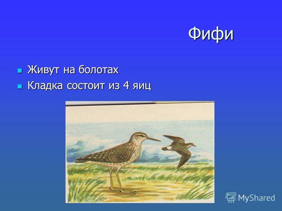 Фифи Фифи Живут на болотах Живут на болотах Кладка состоит из 4 яиц Кладка состоит из 4 яиц