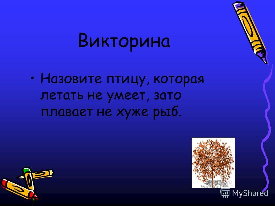 Викторина Назовите птицу, которая летать не умеет, зато плавает не хуже рыб.