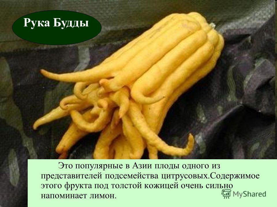 Это популярные в Азии плоды одного из представителей подсемейства цитрусовых.Содержимое этого фрукта под толстой кожицей очень сильно напоминает лимон. Рука Будды