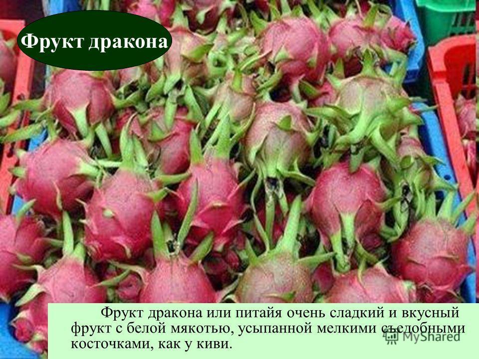 Фрукт дракона или питайя очень сладкий и вкусный фрукт с белой мякотью, усыпанной мелкими съедобными косточками, как у киви. Фрукт дракона