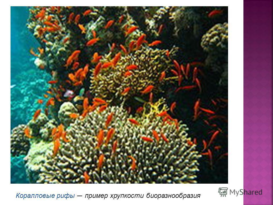 Коралловые рифы пример хрупкости биоразнообразия