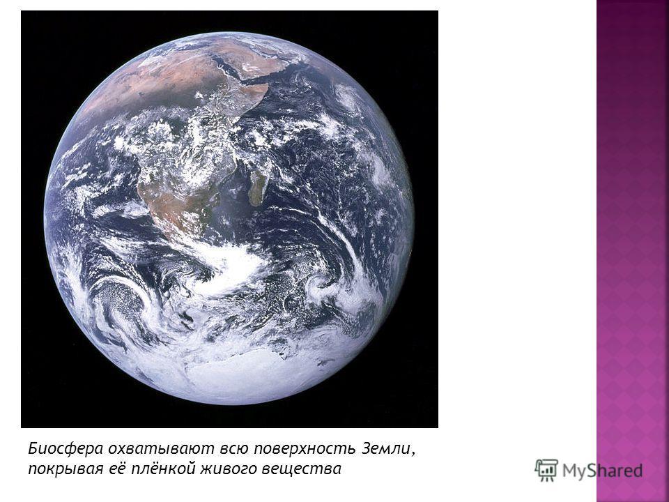 Биосфера охватывают всю поверхность Земли, покрывая её плёнкой живого вещества