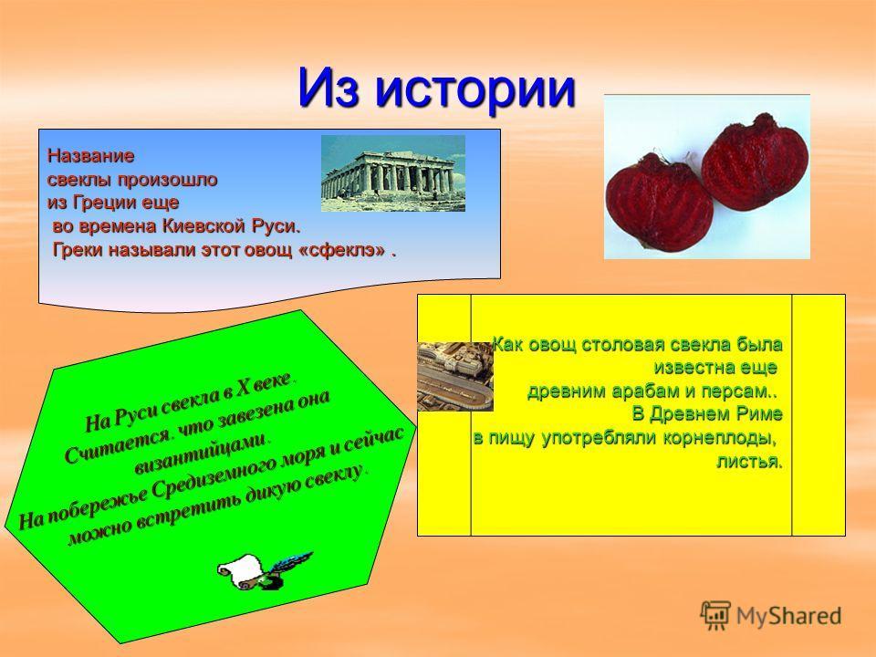 Из истории Название свеклы произошло из Греции еще во времена Киевской Руси. во времена Киевской Руси. Греки называли этот овощ «сфеклэ». Греки называли этот овощ «сфеклэ». Как овощ столовая свекла была известна еще известна еще древним арабам и перс