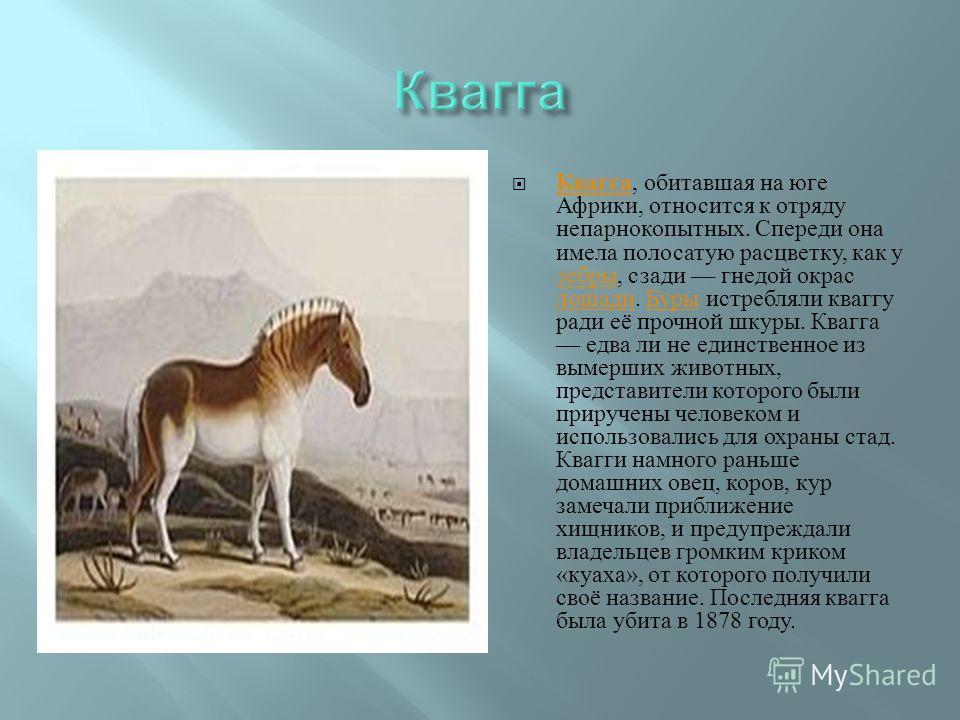 Квагга, обитавшая на юге Африки, относится к отряду непарнокопытных. Спереди она имела полосатую расцветку, как у зебры, сзади гнедой окрас лошади. Буры истребляли кваггу ради её прочной шкуры. Квагга едва ли не единственное из вымерших животных, пре