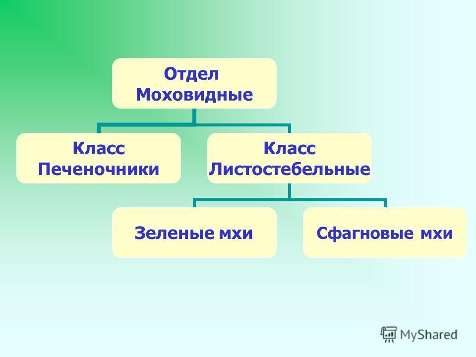 Отдел Моховидные Класс Печеночники Класс Листостебельные Зеленые мхиСфагновые мхи