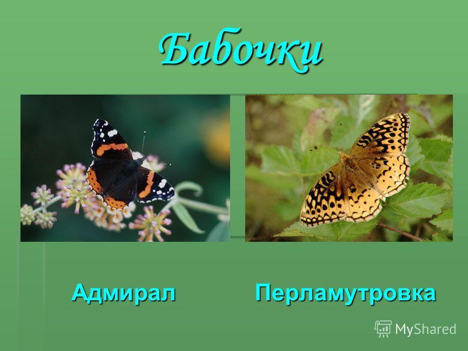 Бабочки Адмирал П Перламутровка