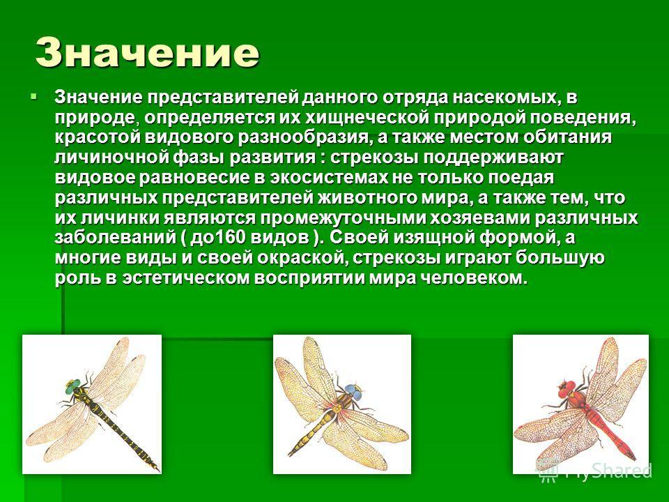 Значение Значение представителей данного отряда насекомых, в природе, определяется их хищнеческой природой поведения, красотой видового разнообразия, а также местом обитания личиночной фазы развития : cтрекозы поддерживают видовое равновесие в экосис