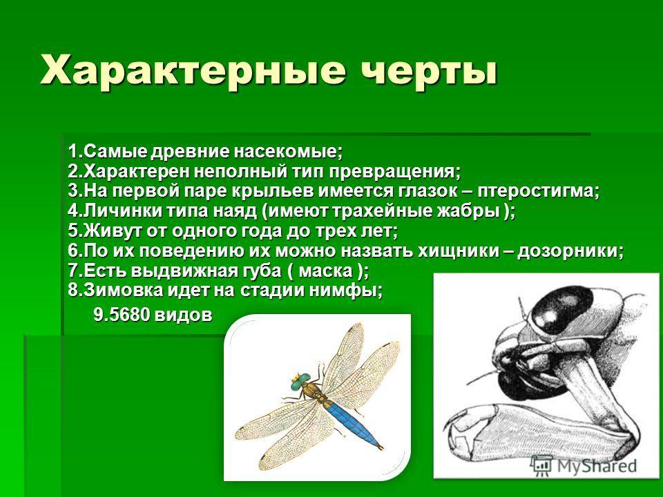 Характерные черты 1.Самые древние насекомые; 2.Характерен неполный тип превращения; 3.На первой паре крыльев имеется глазок – птеростигма; 4.Личинки типа наяд (имеют трахейные жабры ); 5.Живут от одного года до трех лет; 6.По их поведению их можно на