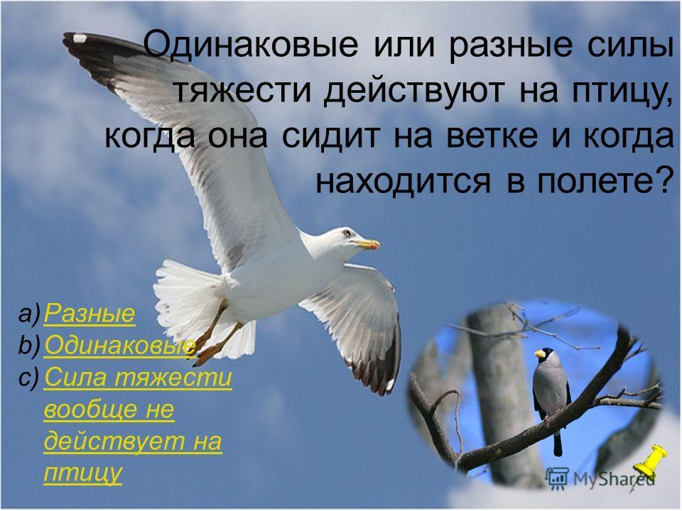 Одинаковые или разные силы тяжести действуют на птицу, когда она сидит на ветке и когда находится в полете? a)РазныеРазные b)ОдинаковыеОдинаковые c)Сила тяжести вообще не действует на птицуСила тяжести вообще не действует на птицу