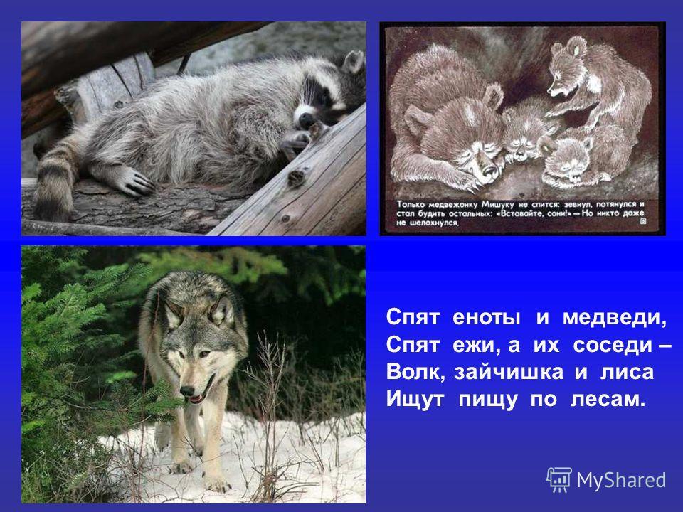 Спят еноты и медведи, Спят ежи, а их соседи – Волк, зайчишка и лиса Ищут пищу по лесам.