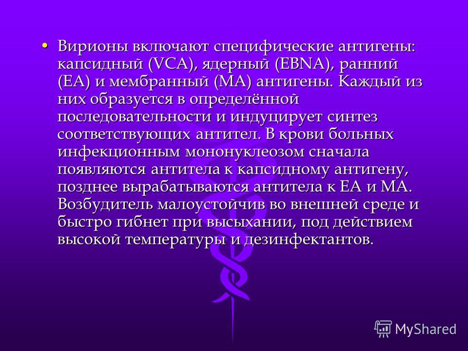 Вирионы включают специфические антигены: капсидный (VCA), ядерный (EBNA), ранний (ЕА) и мембранный (МА) антигены. Каждый из них образуется в определённой последовательности и индуцирует синтез соответствующих антител. В крови больных инфекционным мон
