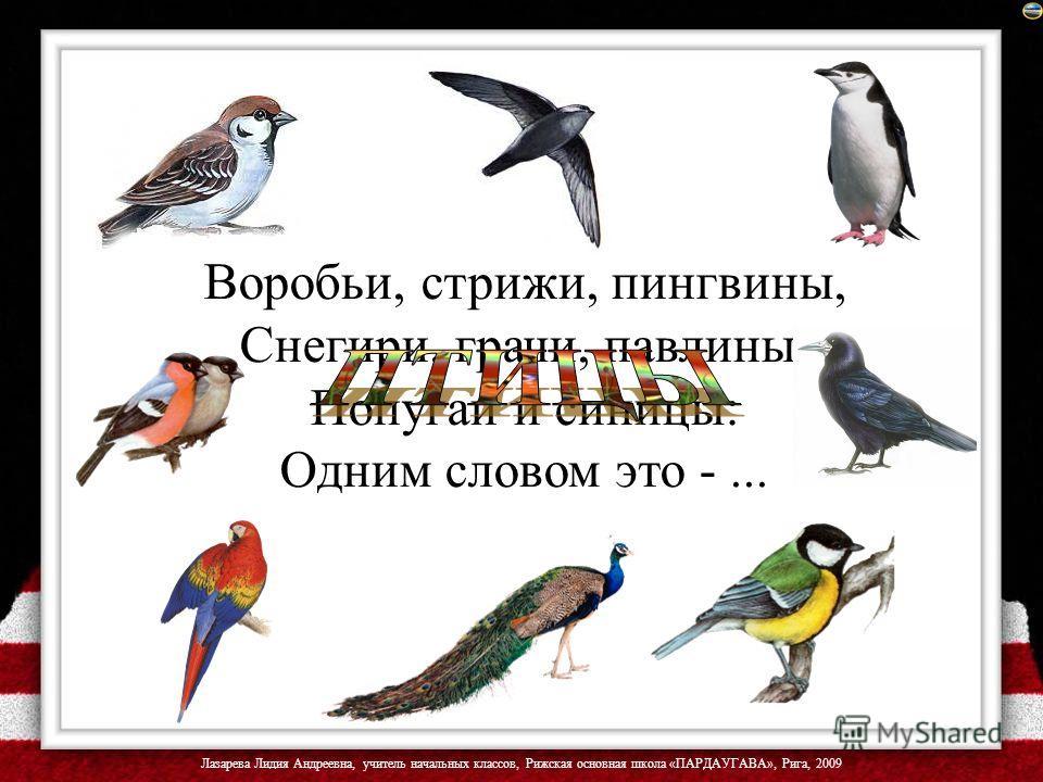 Воробьи, стрижи, пингвины, Снегири, грачи, павлины, Попугаи и синицы: Одним словом это -...