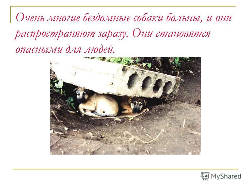Очень многие бездомные собаки больны, и они распространяют заразу. Они становятся опасными для людей.