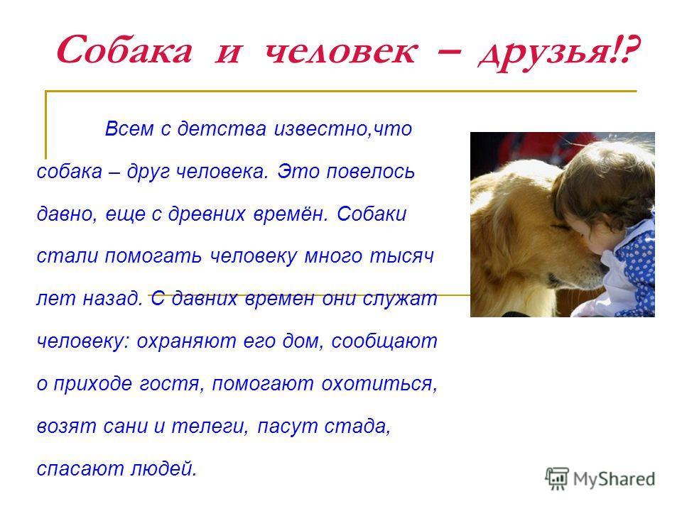 Собака и человек – друзья!? Всем с детства известно,что собака – друг человека. Это повелось давно, еще с древних времён. Собаки стали помогать человеку много тысяч лет назад. С давних времен они служат человеку: охраняют его дом, сообщают о приходе