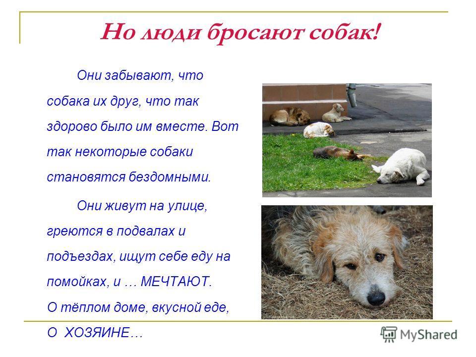 Но люди бросают собак! Они забывают, что собака их друг, что так здорово было им вместе. Вот так некоторые собаки становятся бездомными. Они живут на улице, греются в подвалах и подъездах, ищут себе еду на помойках, и … МЕЧТАЮТ. О тёплом доме, вкусно