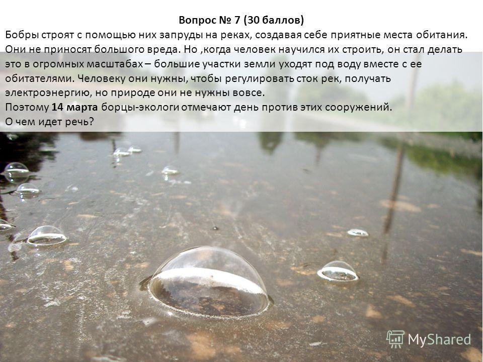 Вопрос 7 (30 баллов) Бобры строят с помощью них запруды на реках, создавая себе приятные места обитания. Они не приносят большого вреда. Но,когда человек научился их строить, он стал делать это в огромных масштабах – большие участки земли уходят под