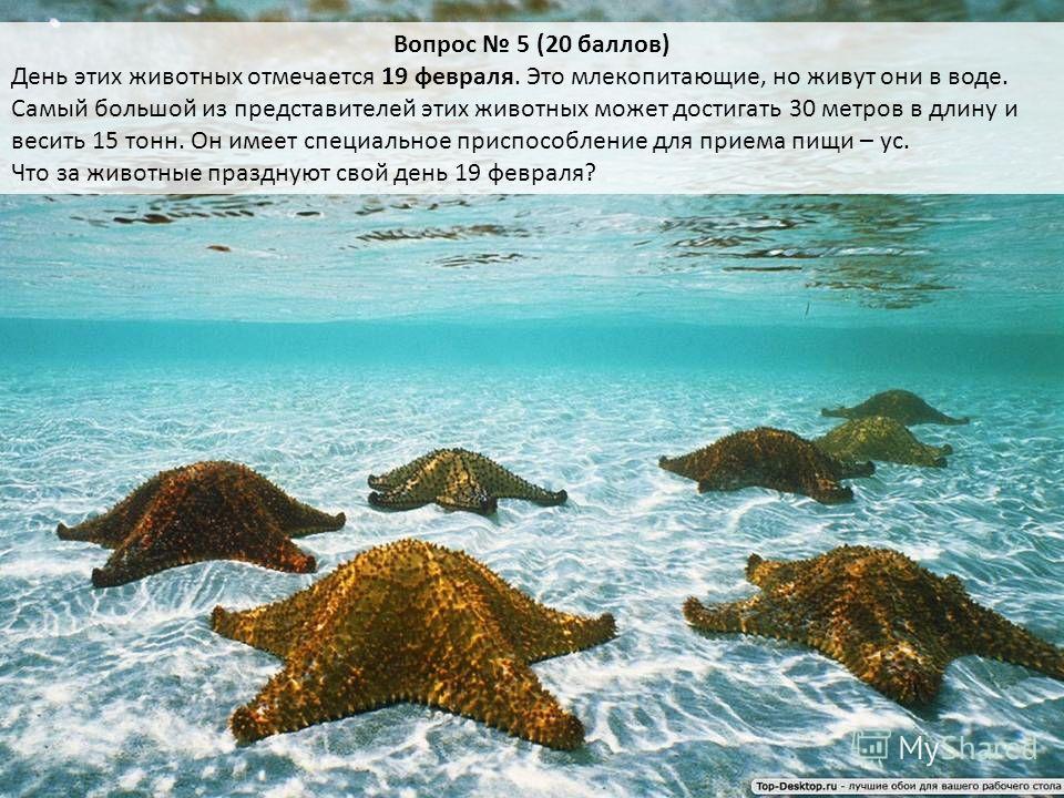Вопрос 5 (20 баллов) День этих животных отмечается 19 февраля. Это млекопитающие, но живут они в воде. Самый большой из представителей этих животных может достигать 30 метров в длину и весить 15 тонн. Он имеет специальное приспособление для приема пи