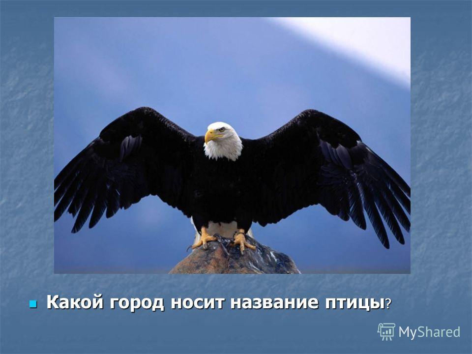 Какой город носит название птицы ? Какой город носит название птицы ?