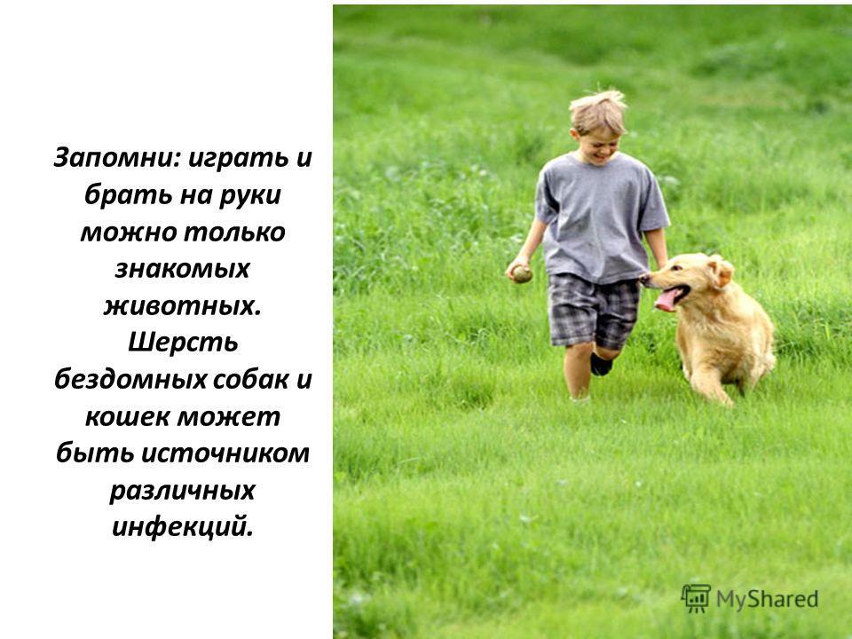 Запомни: играть и брать на руки можно только знакомых животных. Шерсть бездомных собак и кошек может быть источником различных инфекций.