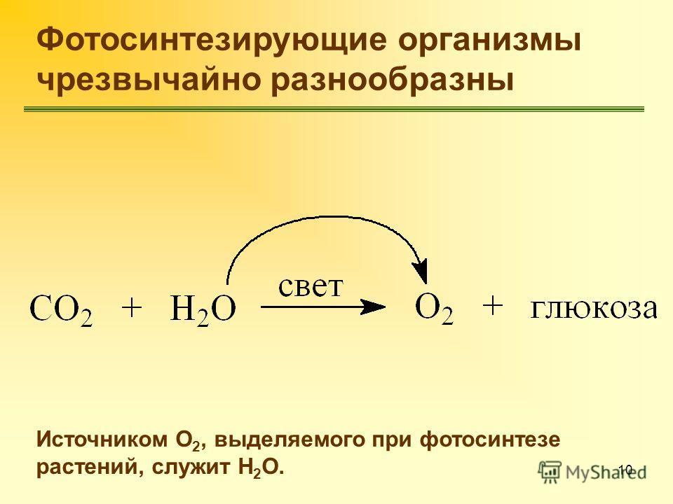 10 Фотосинтезирующие организмы чрезвычайно разнообразны Источником О 2, выделяемого при фотосинтезе растений, служит Н 2 О.