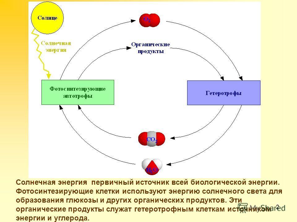 2 Солнечная энергия первичный источник всей биологической энергии. Фотосинтезирующие клетки используют энергию солнечного света для образования глюкозы и других органических продуктов. Эти органические продукты служат гетеротрофным клеткам источником