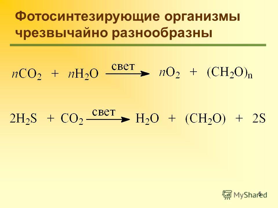 5 Фотосинтезирующие организмы чрезвычайно разнообразны