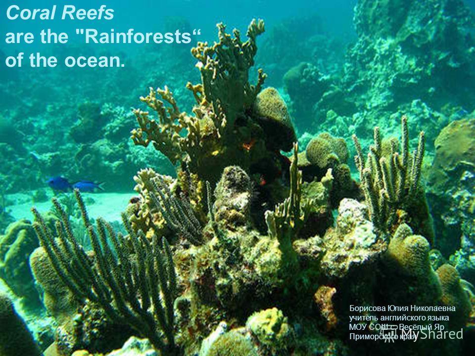 Coral Reefs are the Rainforests of the ocean. Борисова Юлия Николаевна учитель английского языка МОУ СОШ с. Весёлый Яр Приморского края